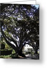 Baobab Trees In Los Angeles Greeting Card