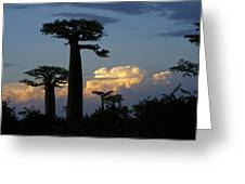 Baobabs And Storm Clouds Greeting Card