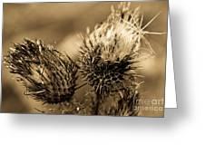 Barbed Beauties Greeting Card
