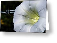 Barbed Flower Greeting Card