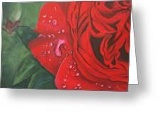 Barb's Rose Greeting Card
