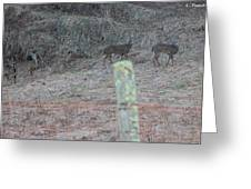 Barbwire And Whitetails Greeting Card