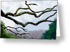 Bare Tree Branches Greeting Card