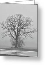 Bare Tree In Fog Greeting Card