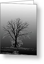 Bare Tree In Fog- Pe Filter Greeting Card