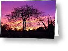 Bare Trees In Gorgeous Sunset Greeting Card