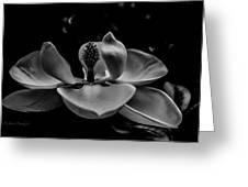 Baring Her Soul - B/w3 Greeting Card