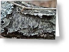 Bark - Lichen - Cat Brier Tendrils Greeting Card