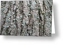 Bark Greeting Card