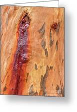 Bark Kc05 Greeting Card