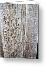 Bark, Moringa Tree Greeting Card