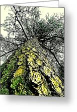 Bark Up The Tall Pine Tree Abstract In Felicina  Louisiana Greeting Card
