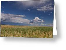 Barley In The Wind Greeting Card
