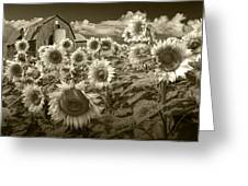 Barn And Sunflowers In Sepia Tone Greeting Card