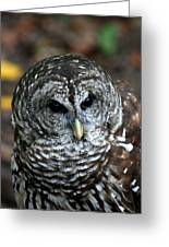 Barn Owl 2 Greeting Card