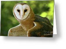 Barn Owl-6553 Greeting Card