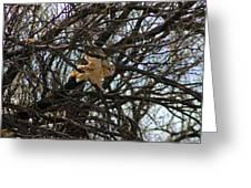Barn Owl In A Tree Greeting Card