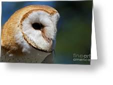 Barn Owl - Intensity Greeting Card