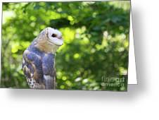 Barn Owl Looking Skyward Greeting Card