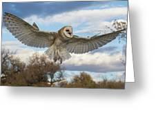 Barn Owl Makes A Happy Landing Greeting Card