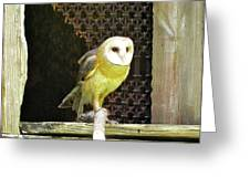 Barn Owl On The Prowl Greeting Card