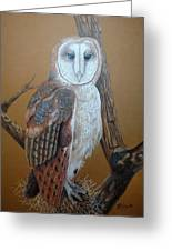 Barn Owl On Tree Greeting Card