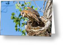 Barn Owl Owlet Climbs Out Of Nest Greeting Card