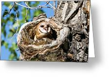 Barn Owl Owlet Says Hello To The World Greeting Card
