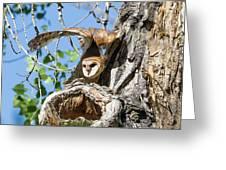 Barn Owl Owlet Stretches High Greeting Card