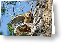 Barn Owl Owlet Stretches Greeting Card