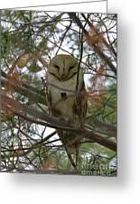 Barn Owl Sleeping Greeting Card