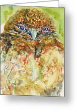Barn Owl Thinking Greeting Card