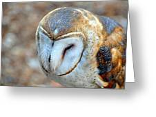 Barn Owle 1 Greeting Card