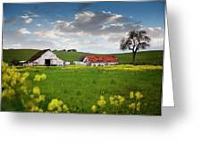 Barn Paso Robles, Ca Greeting Card