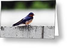 Barn Swallow At Fort Larned Greeting Card