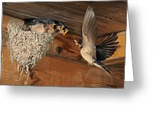 Barn Swallows At Nest Greeting Card by Scott  Linstead