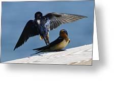 Barn Swallows Greeting Card