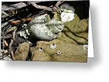 Barnacles And Crabs Greeting Card