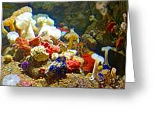 Barnacles And Sea Urchin Among Invertebrates In Monterey Aquarium-california  Greeting Card