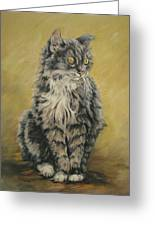 Barnhardt's Cat Greeting Card