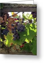 Barnyard Grapes Greeting Card