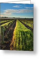 Barossa Vineyard Morning Greeting Card