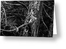 Barred In Black And White Greeting Card