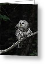 Barred Owl 2 Greeting Card
