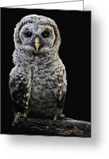 Barred Owl Baby -4 Greeting Card
