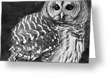 Barred Owl Beauty Greeting Card