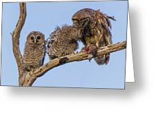 Barred Owl Family Greeting Card