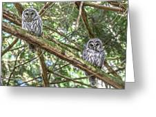 Barred Owl Fledglings Greeting Card