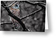 Barred Owl Hungry  Greeting Card
