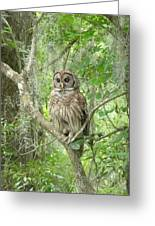 Barred Owl I Greeting Card